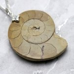 English Jurassic Ammonite Fossil Pendant - 44mm