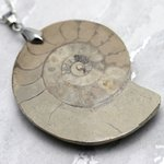 English Jurassic Ammonite Fossil Pendant - 48mm