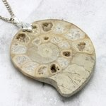 English Jurassic Ammonite Fossil Pendant - 50mm