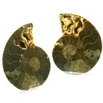 Madagascan Ammonite Fossil Pair ~10.5cm