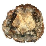 Petrified Wood Polished Slice ~11.7cm
