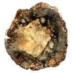 Petrified Wood Polished Slice ~11.8cm