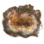 Petrified Wood Polished Slice ~12cm
