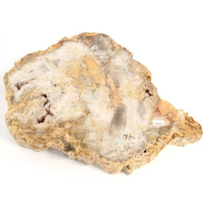 Petrified Wood - 28cm